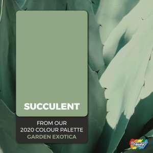 Succulent-03
